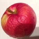 apple wrinkled
